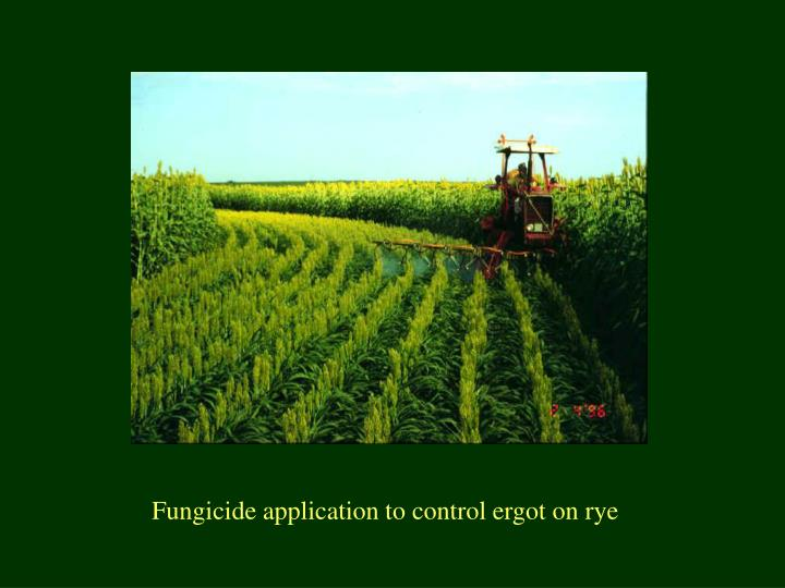 Fungicide application to control ergot on rye