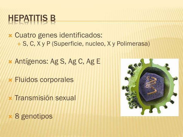 Cuatro genes identificados: