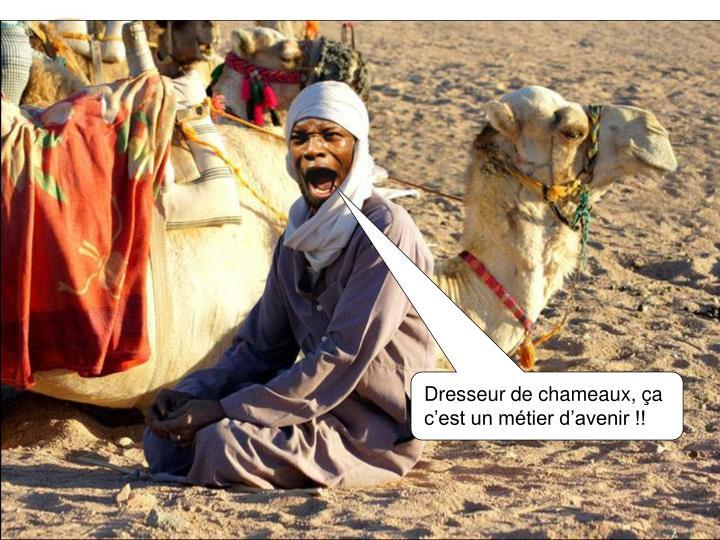 Dresseur de chameaux, ça c'est un métier d'avenir !!
