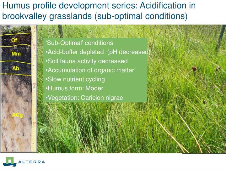 Humus profile development series: Acidification in brookvalley grasslands (sub-optimal conditions)