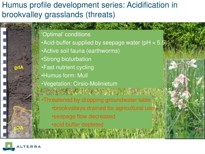 Humus profile development series: Acidification in brookvalley grasslands (threats)