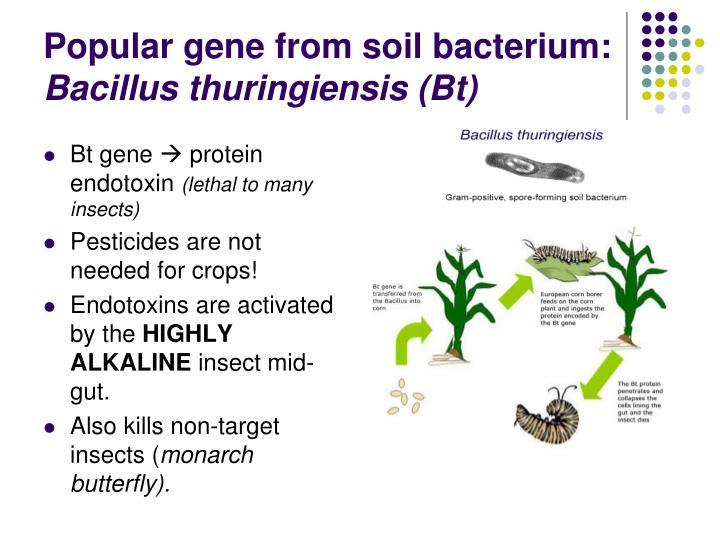 Popular gene from soil bacterium: