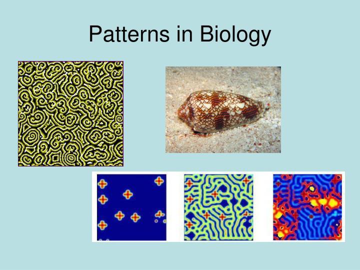 Patterns in Biology