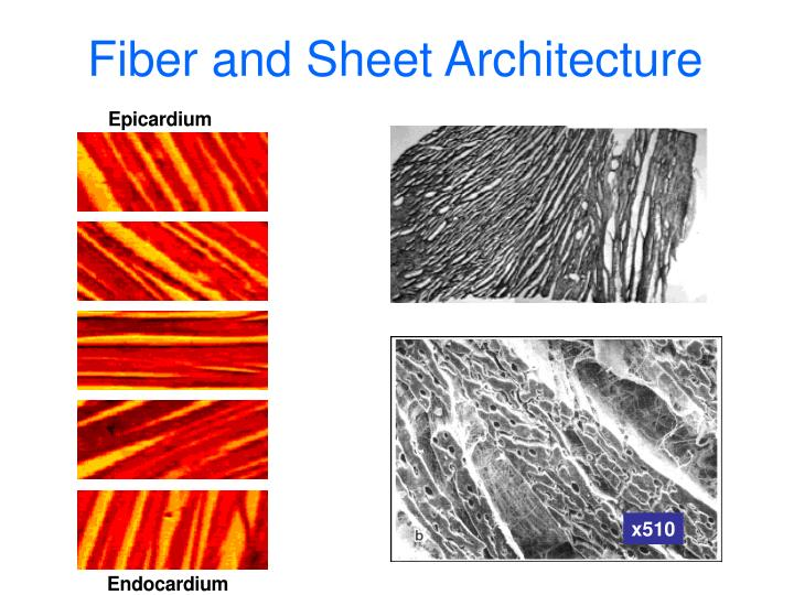 Fiber and Sheet Architecture