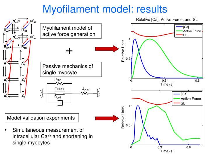 Myofilament model: results