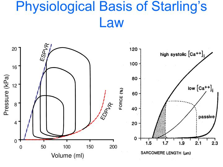 Physiological Basis of Starling's Law