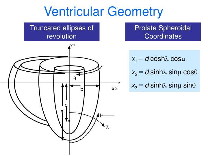 Ventricular Geometry