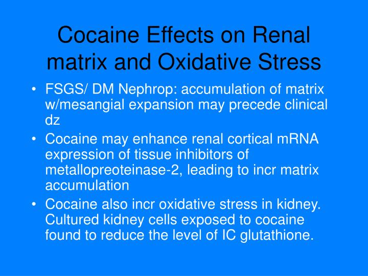 Cocaine Effects on Renal matrix and Oxidative Stress