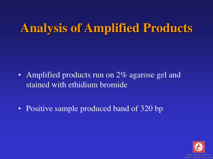 Analysis of Amplified Products