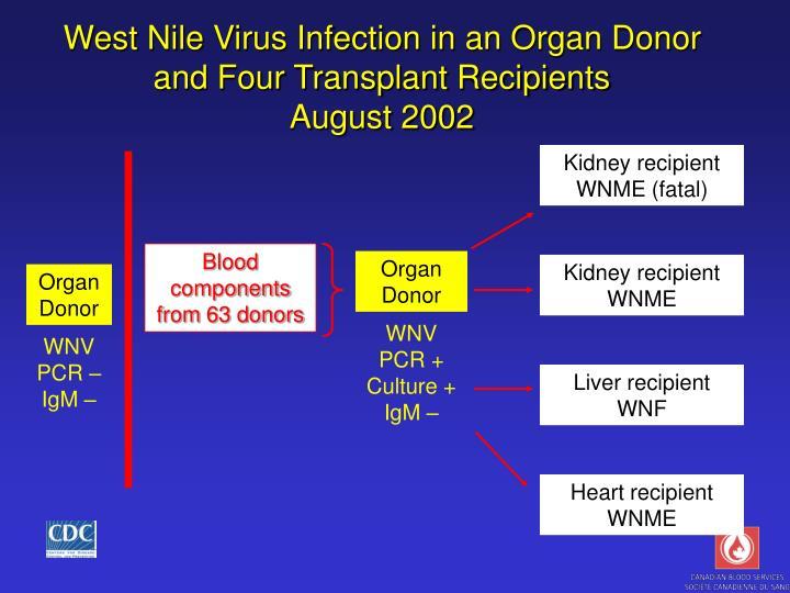 Kidney recipient