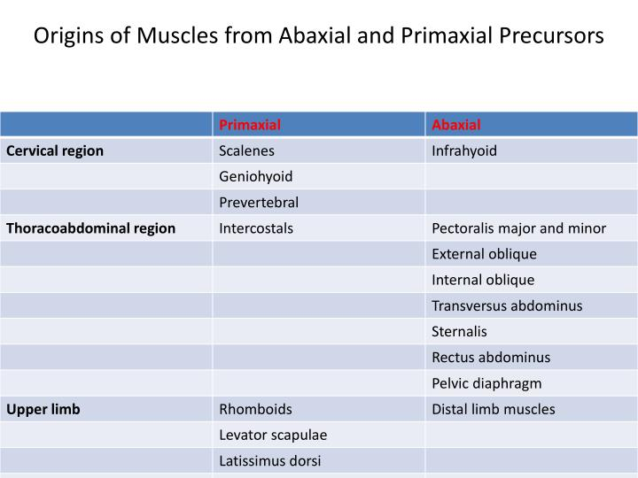 Origins of Muscles from