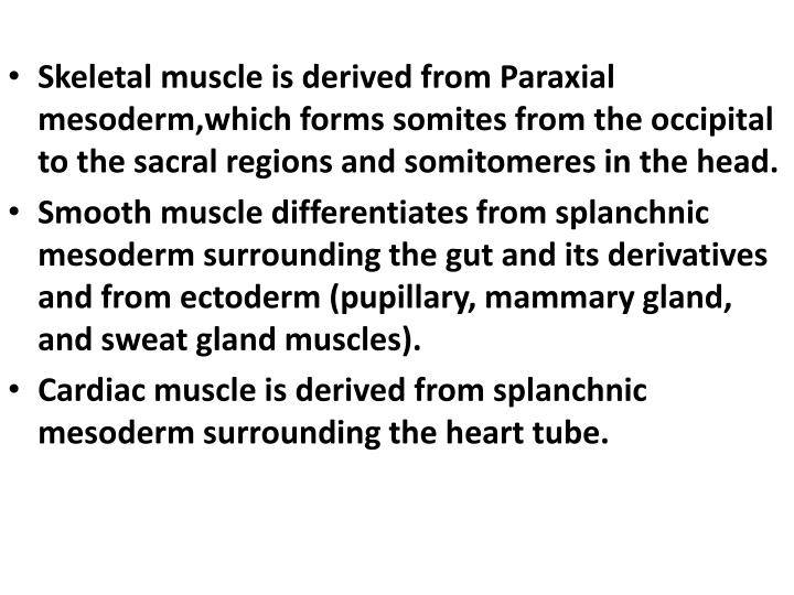 Skeletal muscle is derived from Paraxial