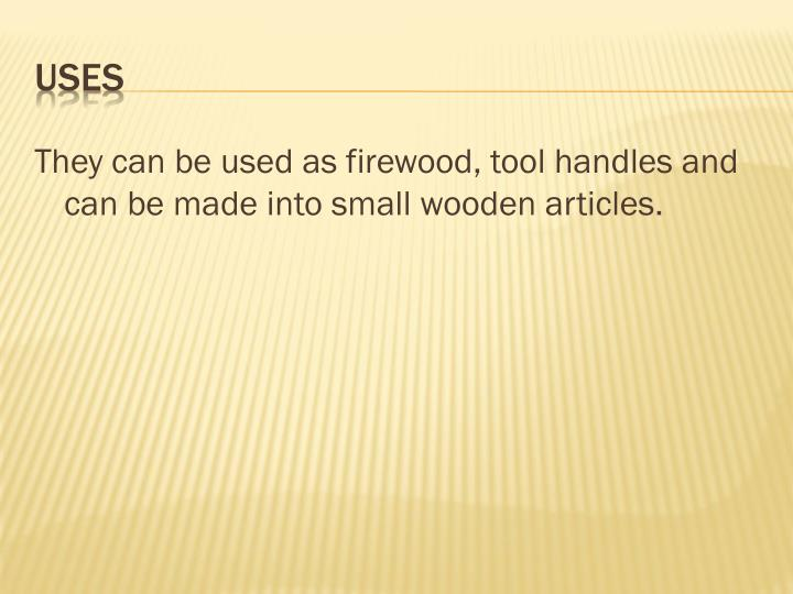 They can be used as firewood, tool handles and can be made into small wooden articles.