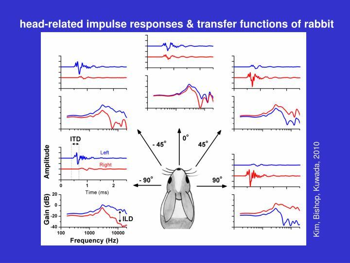 head-related impulse responses & transfer functions of rabbit