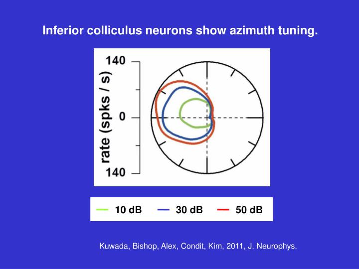 Inferior colliculus neurons show azimuth tuning.