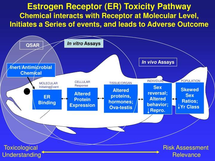 Estrogen Receptor (ER) Toxicity Pathway