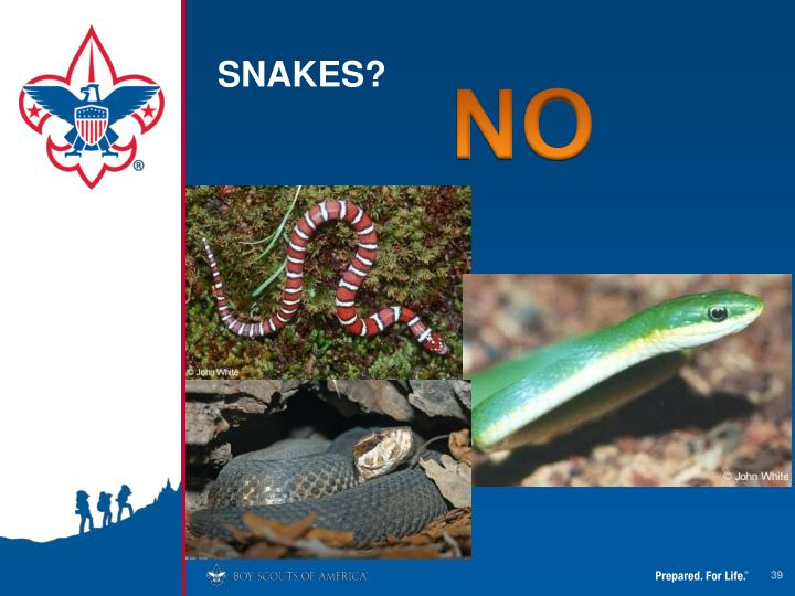 SNAKES?