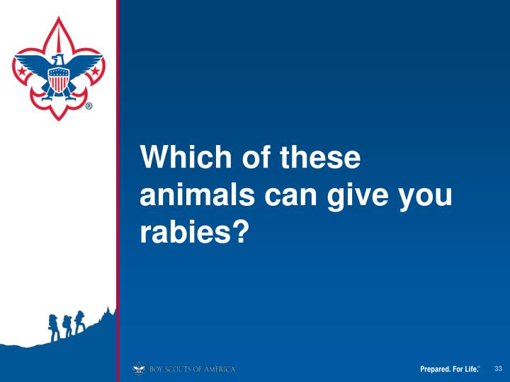 Which of these animals can give you rabies?