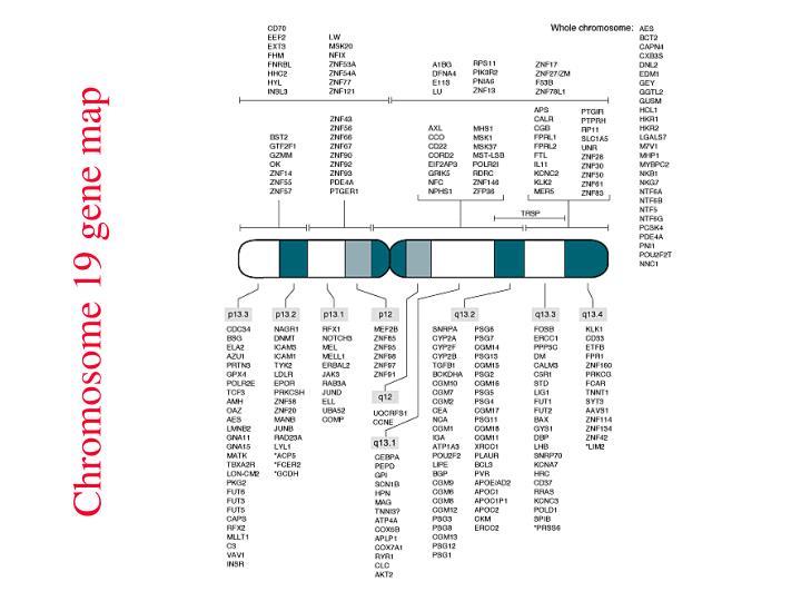 Chromosome 19 gene map