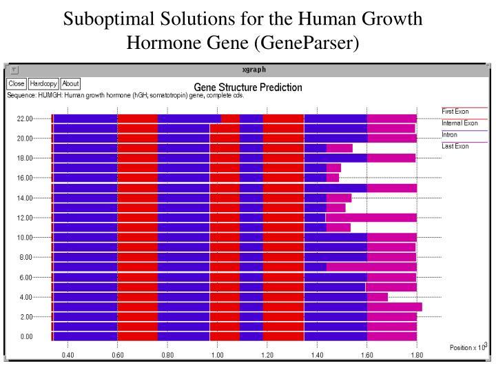Suboptimal Solutions for the Human Growth Hormone Gene (GeneParser)