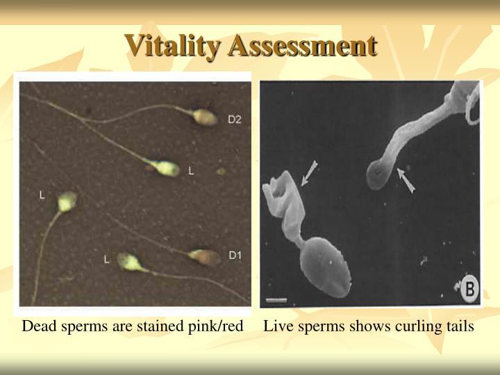 Vitality Assessment