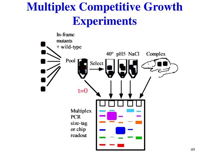 Multiplex Competitive Growth Experiments