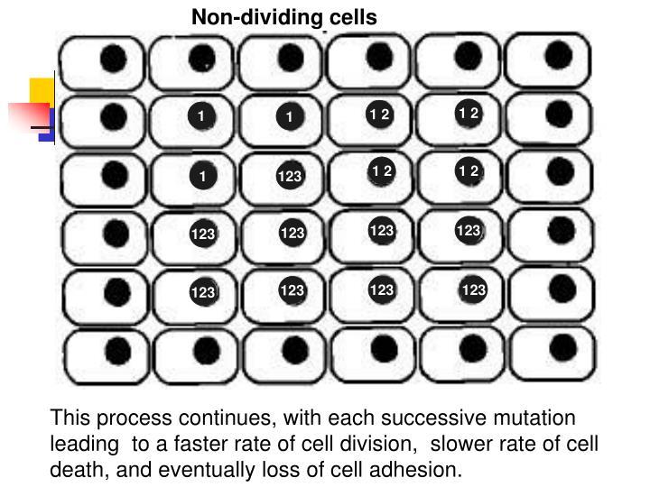Non-dividing cells