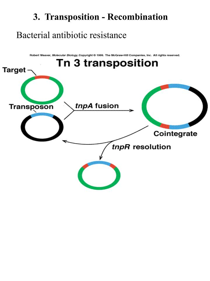 3.  Transposition - Recombination