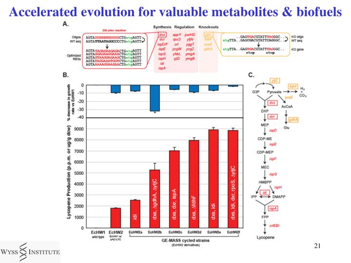 Accelerated evolution for valuable metabolites & biofuels