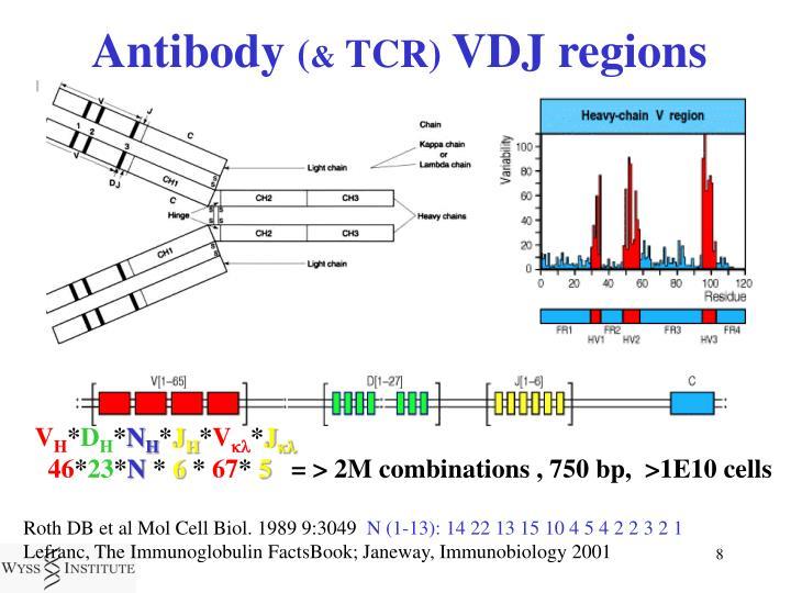 Antibody