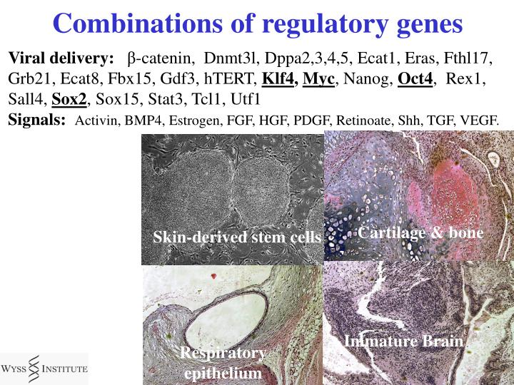 Combinations of regulatory genes