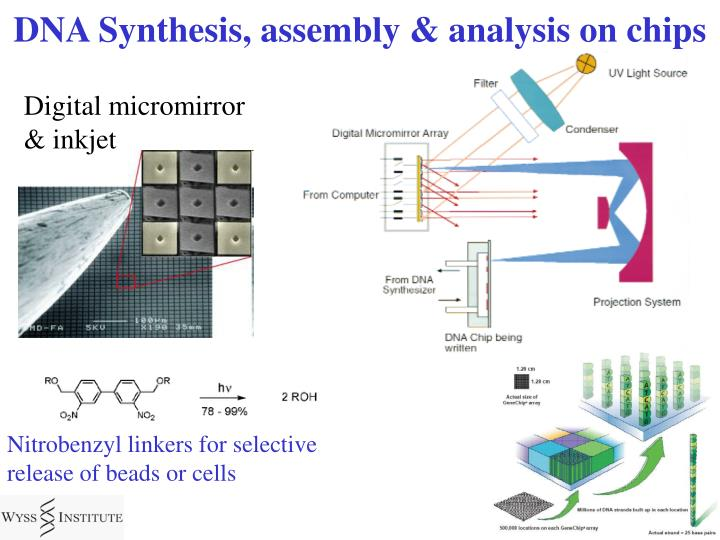 DNA Synthesis, assembly & analysis on chips