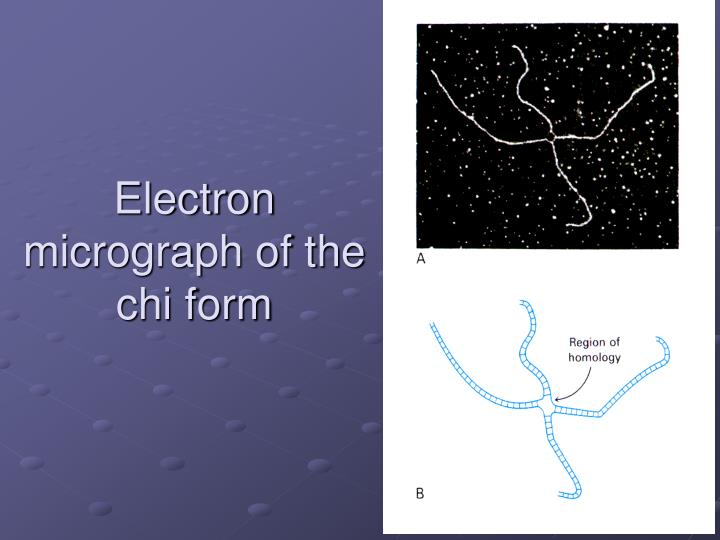 Electron micrograph of the chi form