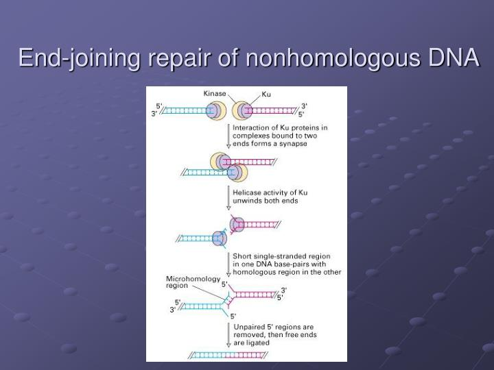 End-joining repair of nonhomologous DNA