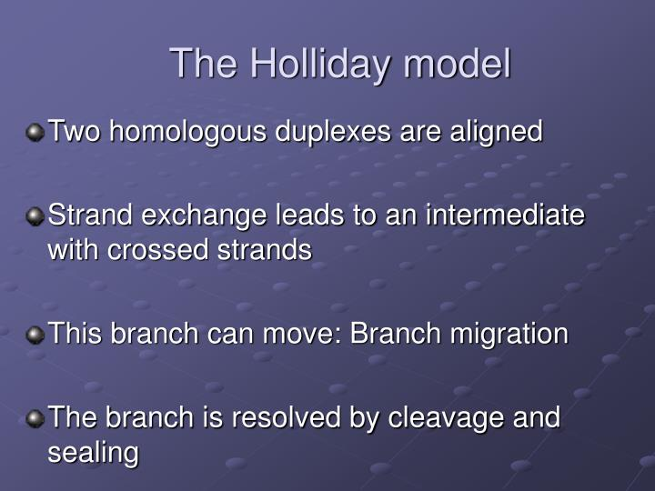 The Holliday model
