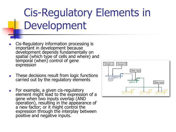 Cis-Regulatory Elements in Development