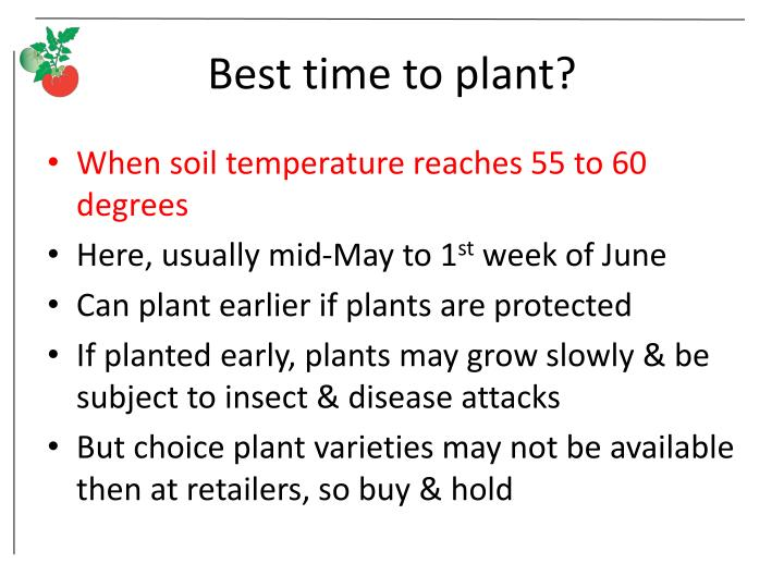Best time to plant?