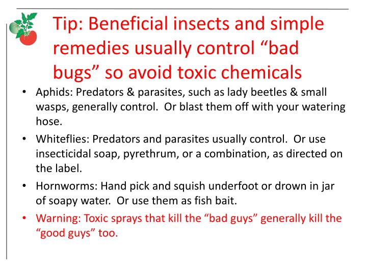 "Tip: Beneficial insects and simple remedies usually control ""bad bugs"" so avoid toxic chemicals"