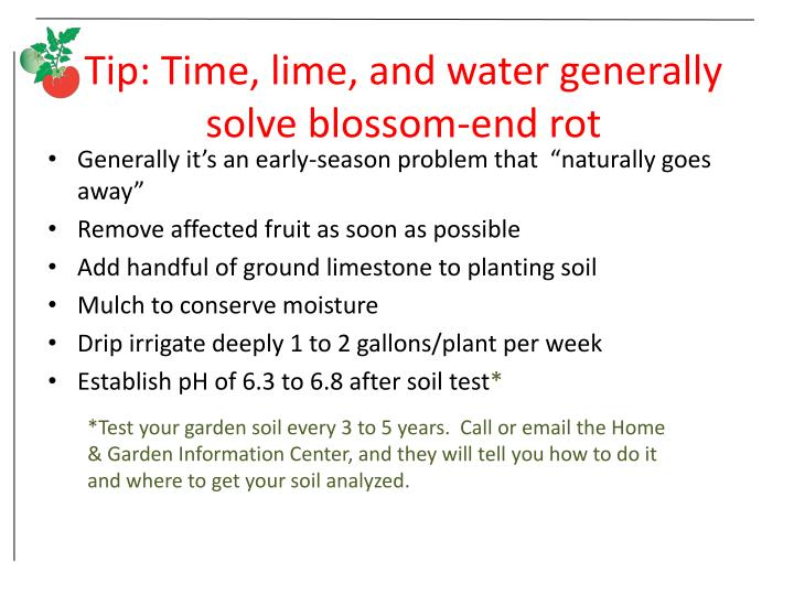 Tip: Time, lime, and water generally solve blossom-end rot