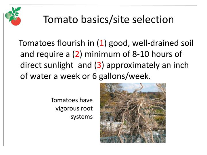 Tomato basics/site selection