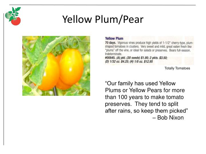 Yellow Plum/Pear