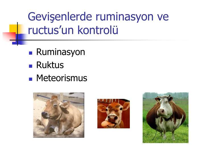 Gevişenlerde ruminasyon ve ructus'un kontrolü