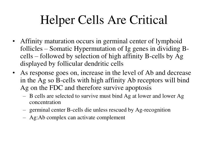 Helper Cells Are Critical