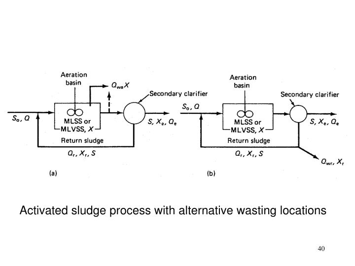 Activated sludge process with alternative wasting locations