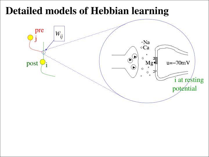 Detailed models of Hebbian learning