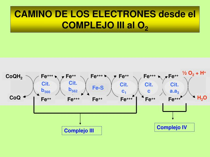 Complejo IV