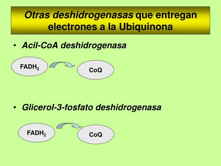 Otras deshidrogenasas