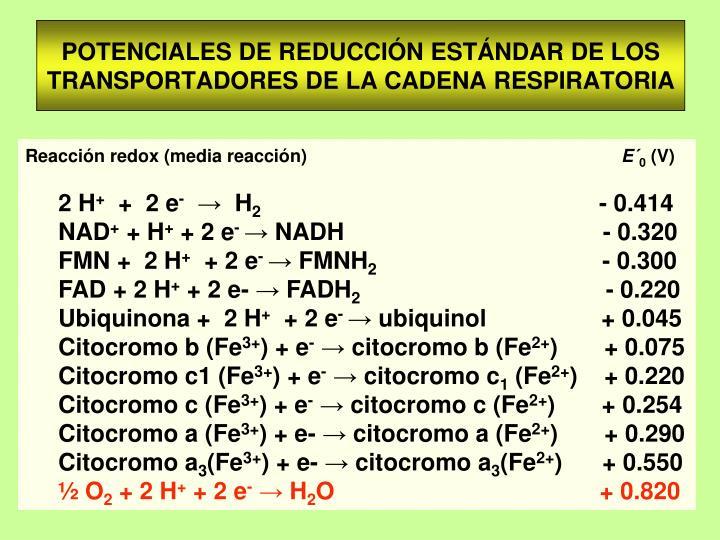 POTENCIALES DE REDUCCIÓN ESTÁNDAR DE LOS TRANSPORTADORES DE LA CADENA RESPIRATORIA