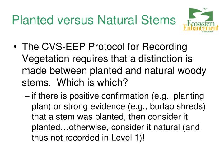 Planted versus Natural Stems
