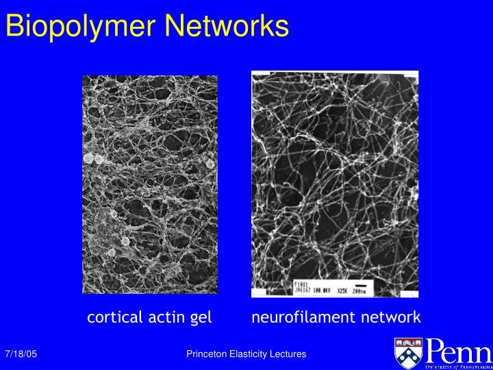 Biopolymer Networks